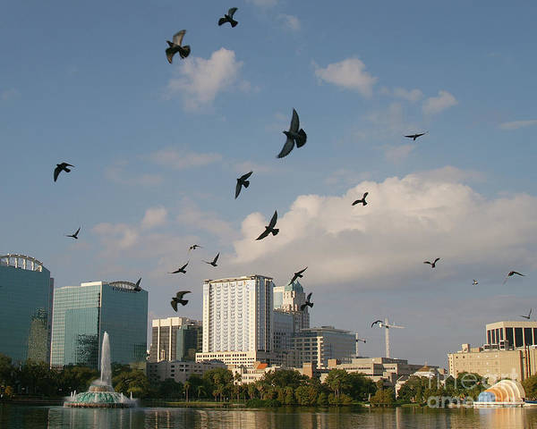 Building Art Print featuring the photograph Birded Dowtown by Jack Norton