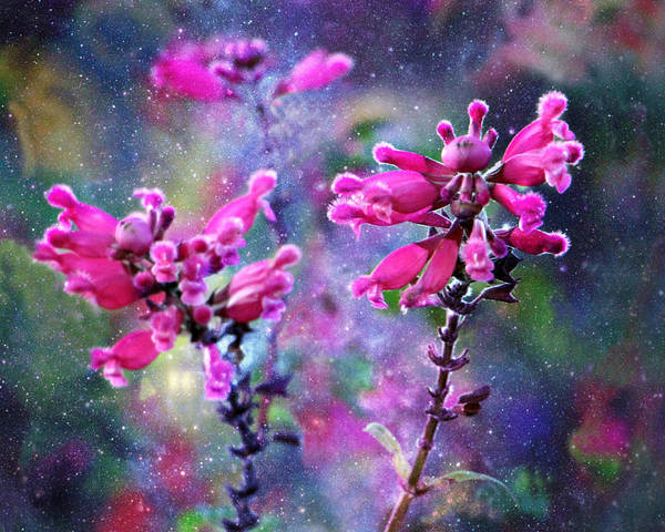 Celestial Blooms-2 Art Print featuring the photograph Celestial Blooms-2 by Kathy M Krause