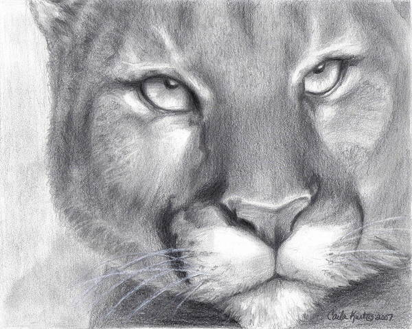 Cougar Art Print featuring the drawing Cougar Spirit by Carla Kurt