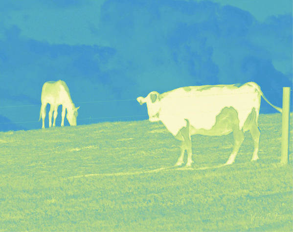 Cow Art Print featuring the photograph Country Hillside by Wendy Fike