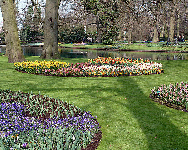 Keukenhof Gardens. Lisse Art Print featuring the photograph Dutch Tulip Gardens by Charles Ridgway