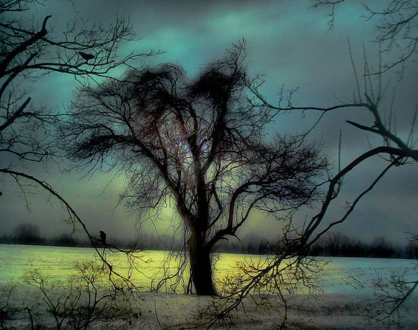 Blue Art Print featuring the photograph Ethereal Trees by Gothicrow Images