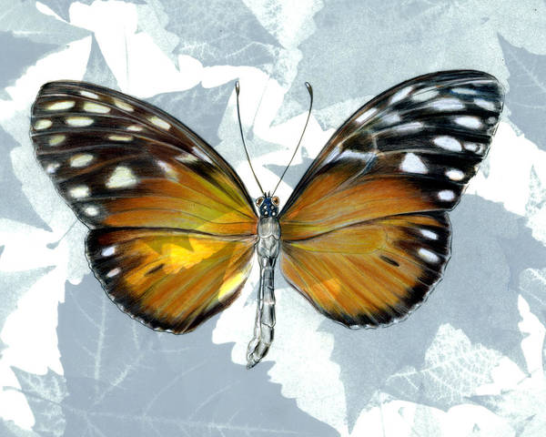Moths Art Print featuring the painting Heliconia Butterfly by Mindy Lighthipe