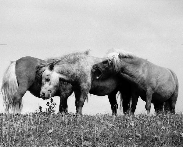 Art Print featuring the photograph Horses 3 by Stephen Harris