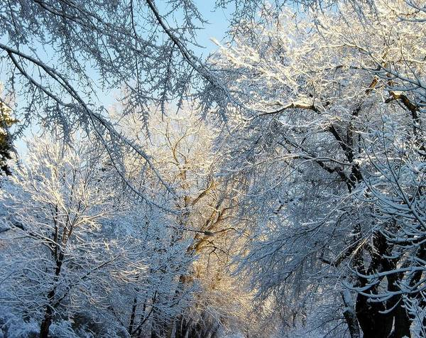 Ice On Trees Art Print featuring the photograph Ice Storm On The 6th IIi by Jacqueline Russell
