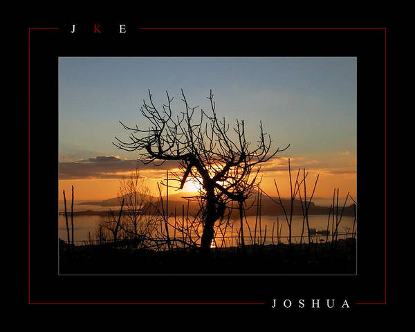 Tree Art Print featuring the photograph Joshua by Jonathan Ellis Keys