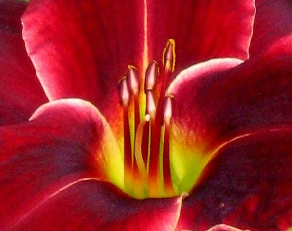 Floral Art Print featuring the photograph Lily's Way by Marla McFall