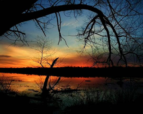 Landscape Art Print featuring the photograph Luminous Essence by Mitch Cat