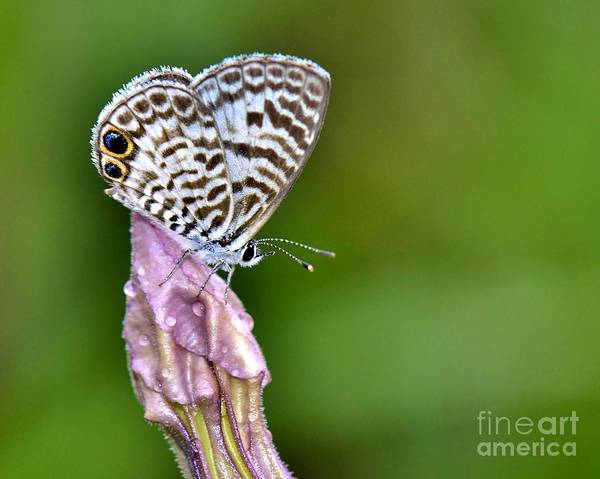 Butterfly Art Print featuring the photograph Morning Delight by Lisa Renee Ludlum