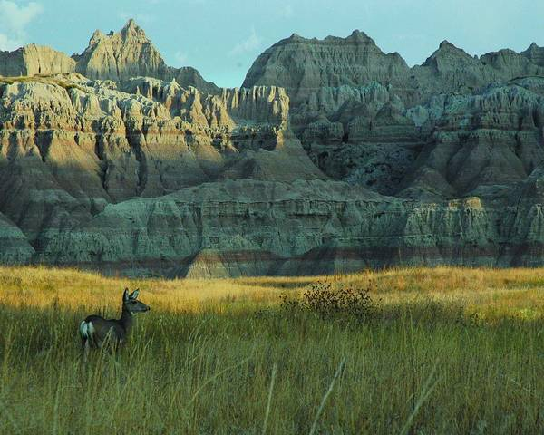 Deer Art Print featuring the photograph Morning In The Badlands by Julie Clements