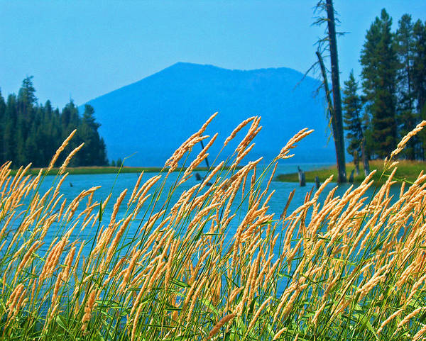 Nature Art Print featuring the photograph Mt. Bachelor by Dorota Nowak