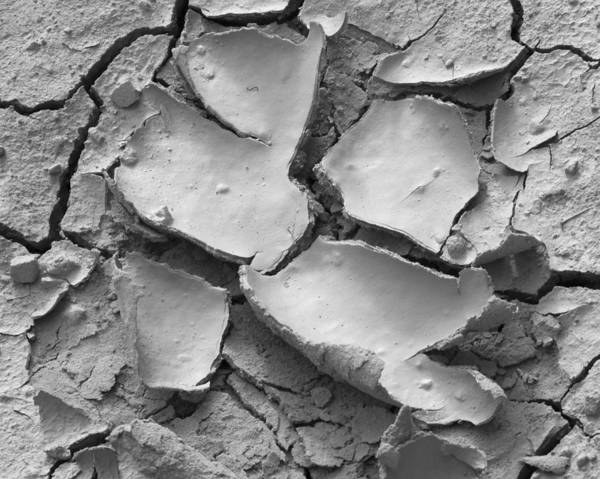 Cracked Art Print featuring the photograph Mv Cracked Mud 7412 by Bob Neiman