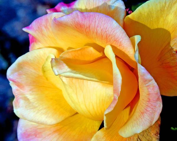 Floral Art Print featuring the photograph November Flame by Lynda Lehmann