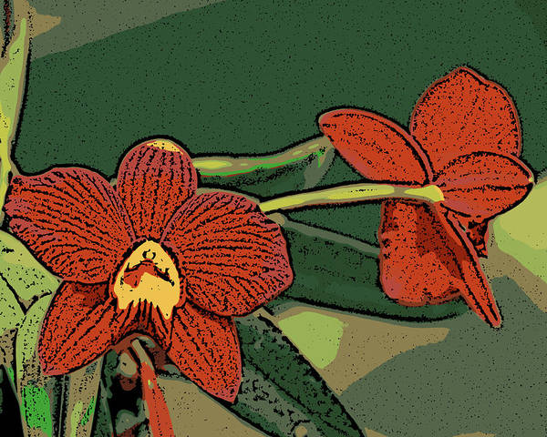 Orchid Art Print featuring the photograph Orange Orchids by Ann Tracy