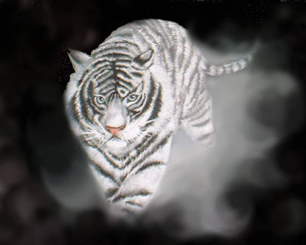 Tiger Art Print featuring the painting Out Of The Night by Darlene Green