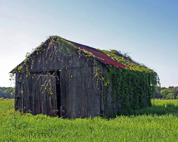 Barns Print featuring the photograph Out To Pasture by Joy Tudor