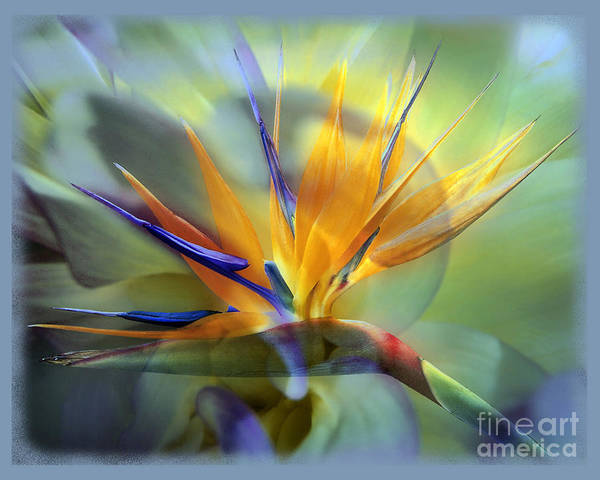 Flower Art Print featuring the photograph Paradise Found by Chuck Brittenham