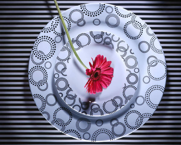 Plates Art Print featuring the photograph Patterns by Jessica Wakefield