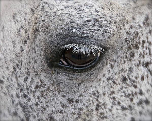 Horse Art Print featuring the photograph Pony Eye by Sherri Cavalier