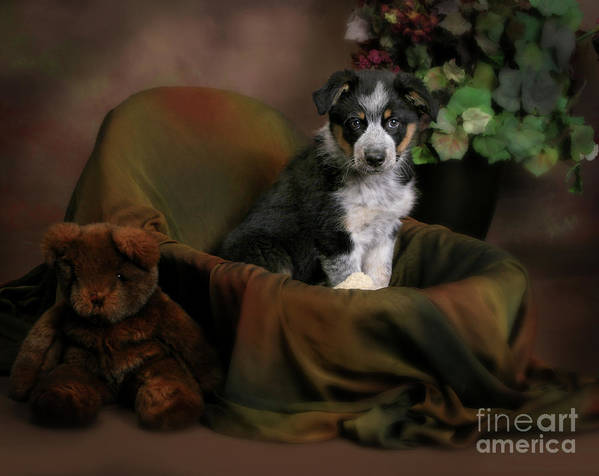 Animal Art Print featuring the photograph Puppy Portrait by Crystal Garner