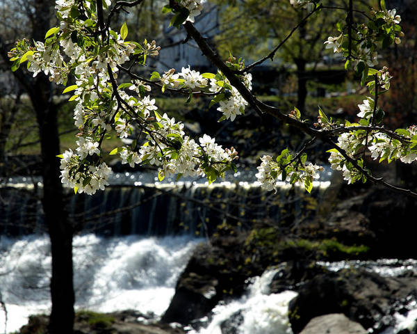 Putnam Ct Art Print featuring the photograph Putnam Spring by Barry Doherty