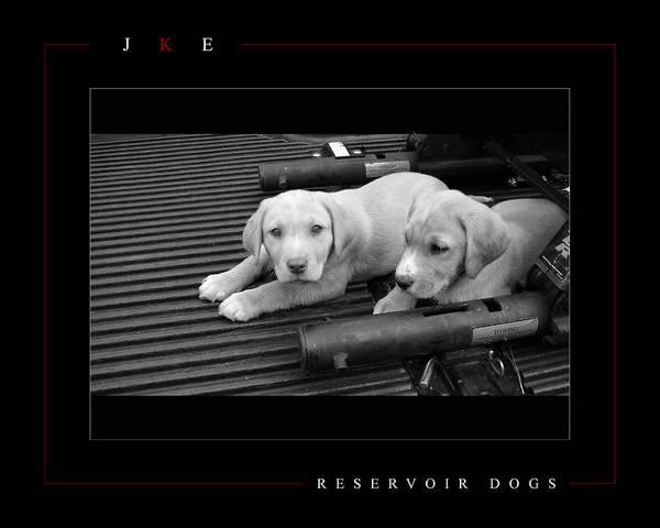Dog Art Print featuring the photograph Reservoir Dogs by Jonathan Ellis Keys