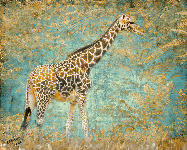 Pittsburgh Zoo Print featuring the photograph Reticulated by Arne Hansen