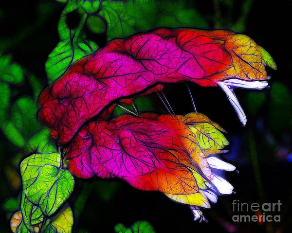 Pink Art Print featuring the photograph Shrimp Plant by Judi Bagwell