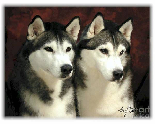 Dog Art Print featuring the digital art Siberian Huskies Related by Maxine Bochnia