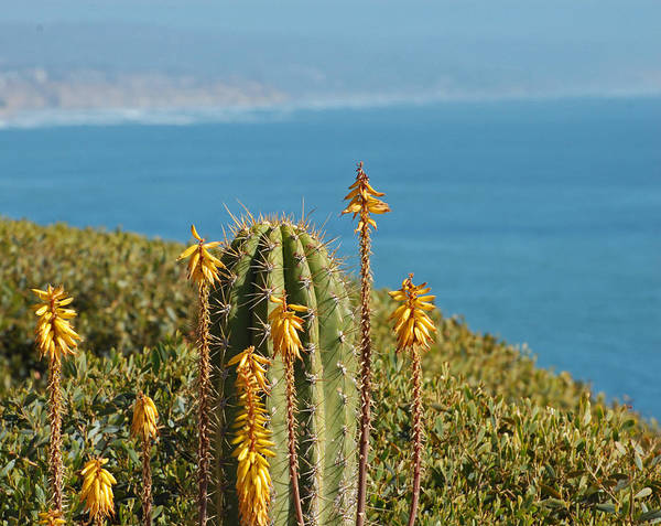 Cactus Art Print featuring the photograph Sunny Day In California by Jean Booth