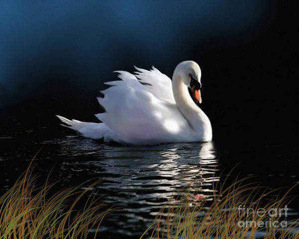 Swan Art Print featuring the painting Swan Elegance by Robert Foster