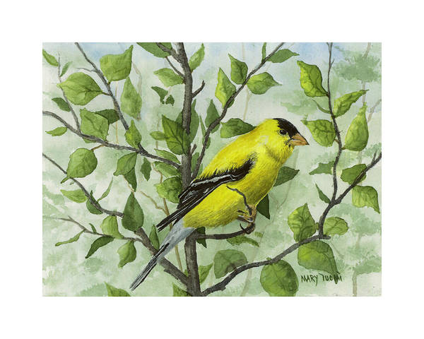 Birds Art Print featuring the painting The Goldfinch by Mary Tuomi