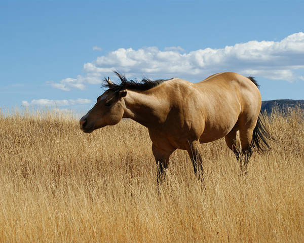Horse Art Print featuring the photograph The Horse by Ernie Echols