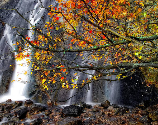 Watefalls Art Print featuring the photograph The Waterfall by Tim Reaves