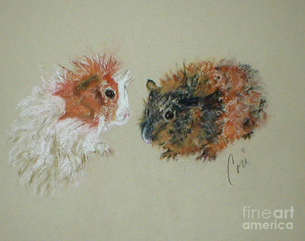 Guineas Art Print featuring the drawing Two Guineas by Cori Solomon