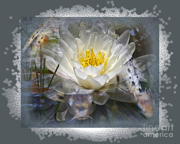 Koi Art Print featuring the photograph Very Koi by Chuck Brittenham
