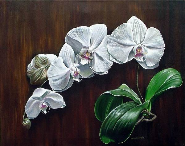 Orchids Art Print featuring the painting White Orchids II by Joan Garcia