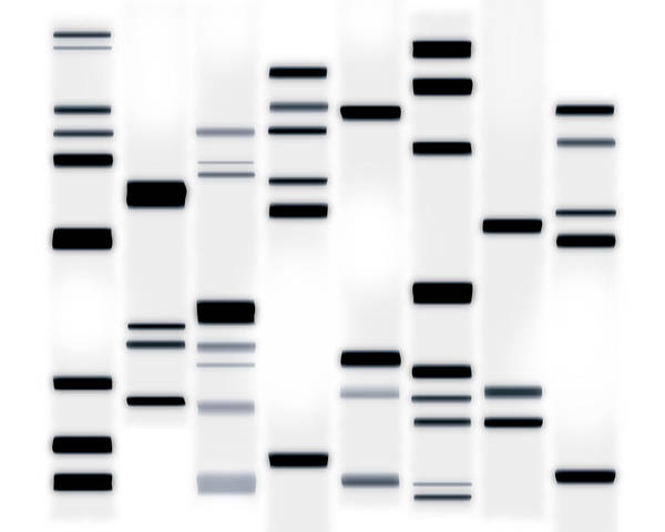 Dna Art Art Print featuring the digital art Dna Art Black On White by Michael Tompsett