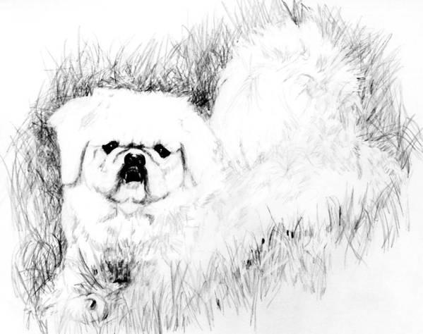 Art Print featuring the drawing Jasper by Carliss Mora