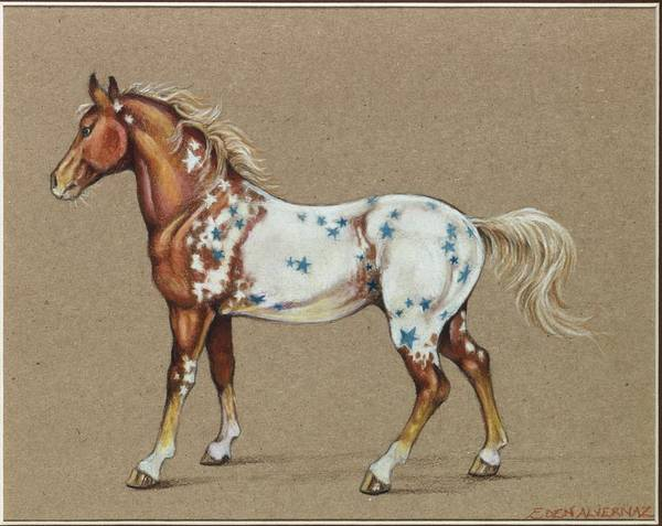 Horse Art Print featuring the drawing Star Spangled Horse by Eden Alvernaz
