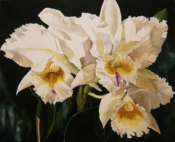 Orchid Art Print featuring the painting White Cattleya Orchids by Alfred Ng