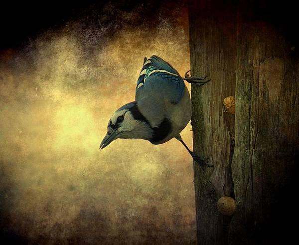 Bird Art Print featuring the photograph Jay On The Side by Amanda Struz