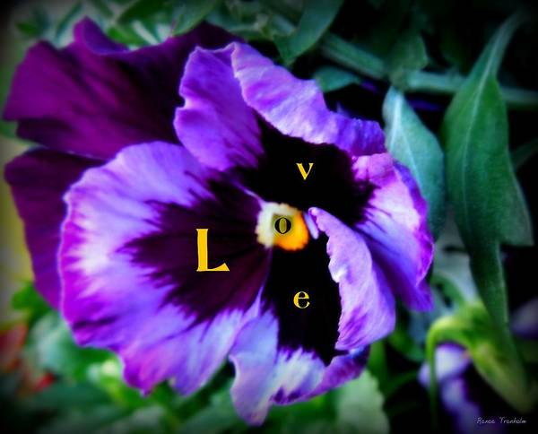 Pansy Art Print featuring the photograph L O V E by Renee Trenholm