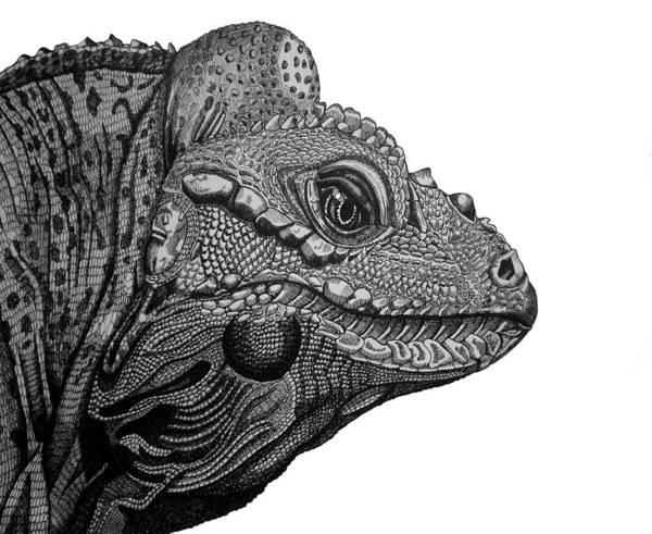 Rhinoceros Art Print featuring the drawing Rhinoceros Iguana by Tracey Gurr BA Hons