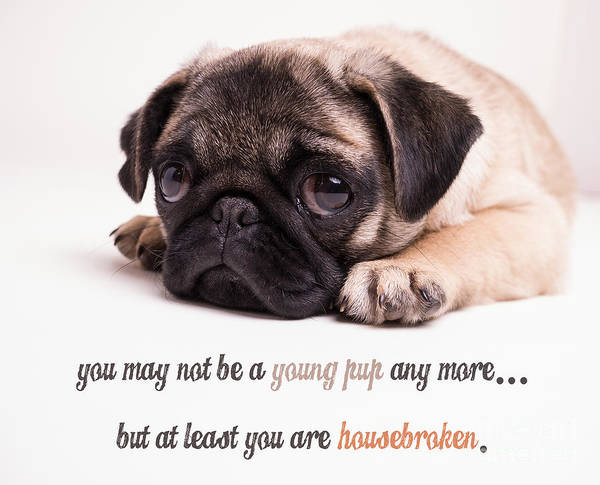 Mature Art Print featuring the photograph Young Pup by Edward Fielding