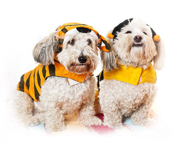 Dogs Art Print featuring the photograph Cute Dogs In Halloween Costumes by Elena Elisseeva