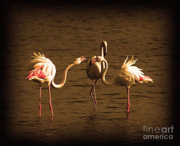 Landscape Art Print featuring the photograph Flamingos Argue by Radoslav Nedelchev