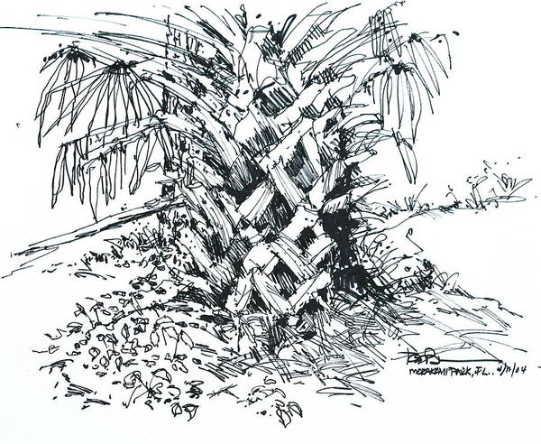 Morikami Gardens' Tree In Boca Raton Florida. Art Print featuring the drawing Morikami Gardens' Tree Boca Raton Florida by Robert Birkenes