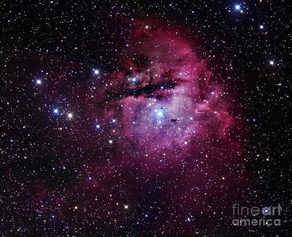 Astronomy Art Print featuring the photograph The Pacman Nebula by Robert Gendler
