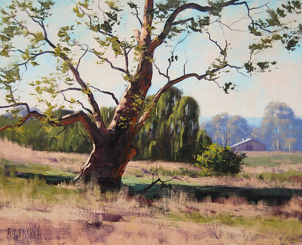 Gum Trees Print featuring the painting Tumut Gum by Graham Gercken